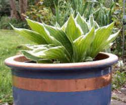 koper beschermt planten